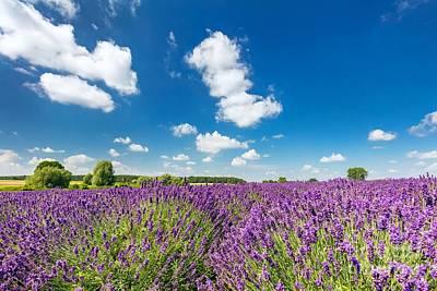 Photograph - Lavender Flower Field In Full Bloom, Sunny Blue Sky by Michal Bednarek