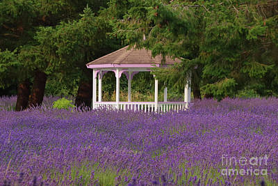 Photograph - Lavender Gazebo by Louise Magno