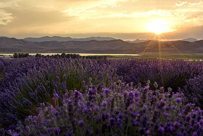 Mountain Photograph - Lavender Glow by Chad Dutson