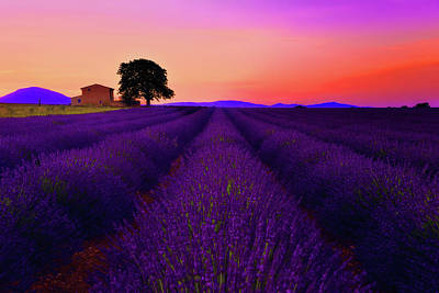 Lavender Home Art Print