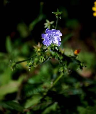 Photograph - Lavender Hue by David Lane