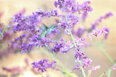 Photograph - Lavender Hummingbird Dream by Lynn Bauer