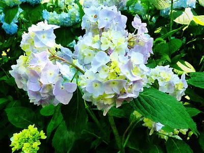 Hydrangea Photograph - Lavender Hydrangea In Garden by Susan Savad
