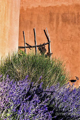Photograph - Lavender In Santa Fe by Robin Zygelman