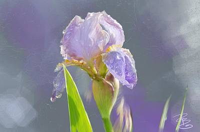 Lavender Iris In The Morning Sun Art Print