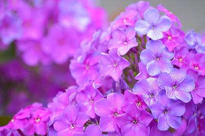 Just Desserts - Lavender by Jimi Bush