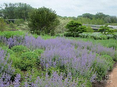 Photograph - Lavender by Kathie Chicoine