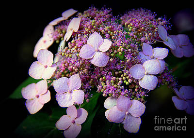 Photograph - Lavender Lace by Lisa L Silva
