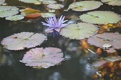 Finds A Way Photograph - Lavender Lily And Autumn Reflection by Dawn Richerson