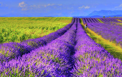 South France Photograph - Lavender Love by Midori Chan
