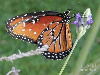 Photograph - Lavender Lunch by Kim Nelson