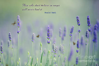 Photograph - Lavender Magic With Quote by Eva Lechner