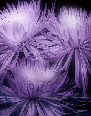 Arrangement Photograph - Lavender Mums by Tom Mc Nemar