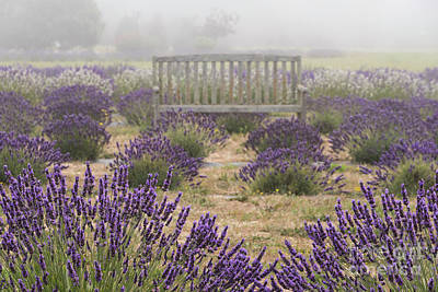 Photograph - Lavender Mystic Bench by Louise Magno
