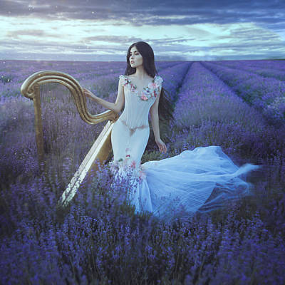 Photograph - Lavender Nocturne by Anya Anti