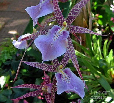 Photograph - Lavender Orchid by Kathie Chicoine