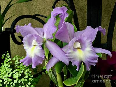 Photograph - Lavender Orchids by Jeannie Rhode