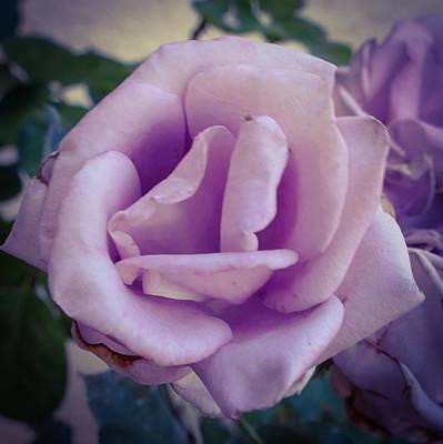 Photograph - Lavender Petals by Laurel Powell