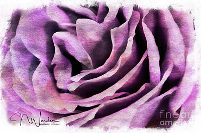 Photograph - Lavender Rose Closeup by Norma Warden