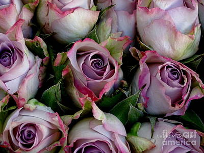 Photograph - Lavender Roses by Lainie Wrightson