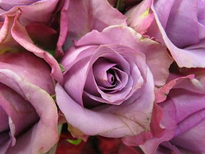 Photograph - Lavender Roses by Rosita Larsson