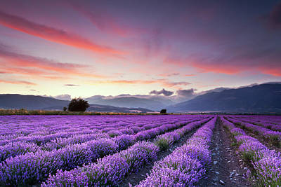 Sunset Landscape Wall Art - Photograph - Lavender Season by Evgeni Dinev