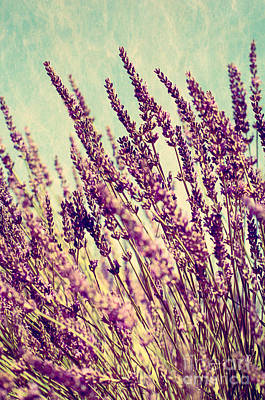 Photograph - Lavender Skies by Jim And Emily Bush