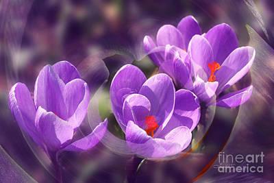 Manipulation Photograph - Lavender Spring by Jutta Maria Pusl
