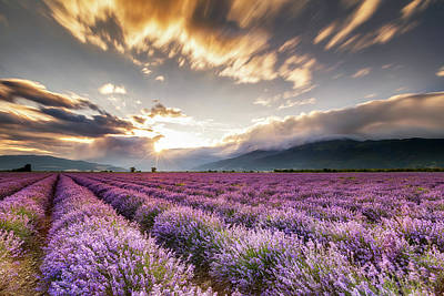 Bulgaria Photograph - Lavender Sun by Evgeni Dinev