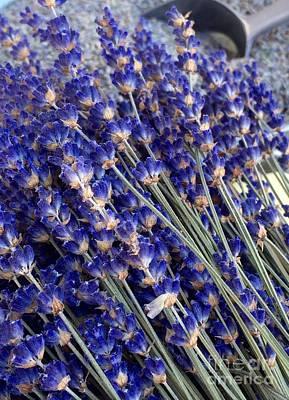 Photograph - Lavender by Susan Garren