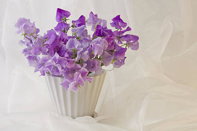 Lavender Sweet Peas And Chiffon Art Print by Sandra Foster