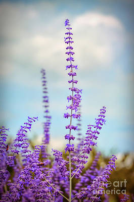 Photograph - Lavender To The Sky by Kerri Farley