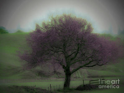 Photograph - Lavender Tree by Karen Lewis