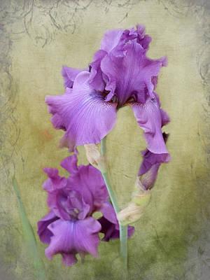 Photograph - Lavender Victorian Iris by TnBackroadsPhotos