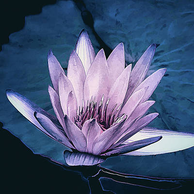 Photograph - Lavender Water Lily  by Julie Palencia