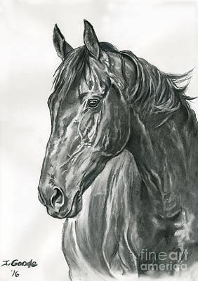 Thoroughbred Drawing - Lavinia by Jana Goode