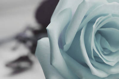 Keith Richards - Lavish Rose by The Art Of Marilyn Ridoutt-Greene