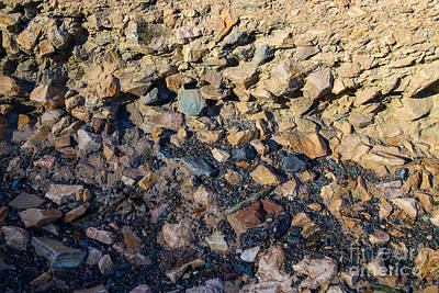 Photograph - Layered Rock by Suzanne Luft