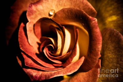 Rosaceae Photograph - Layers Of Beauty by Venetta Archer