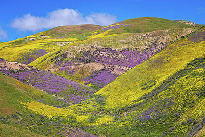 Photograph - Layers Of Color On The Carrizo Superbloom 2017 by Lynn Bauer