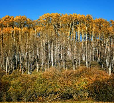 Photograph - Layers Of Fall - Aspens by Nikolyn McDonald