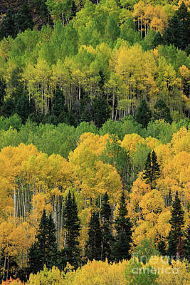 Photograph - Layers Of Green And Yellow by Doug Sturgess