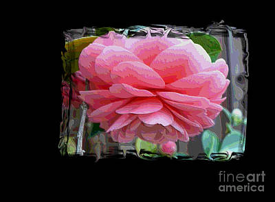 Camellia Digital Art - Layers Of Pink Camellia Dream by Carol Groenen