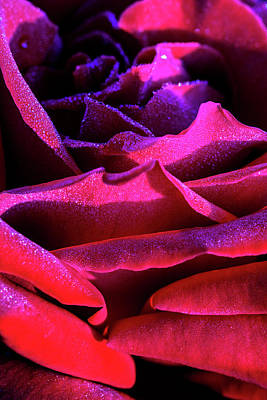 Photograph - Layers Of Red Rose by Vishwanath Bhat