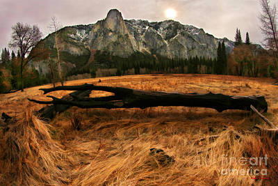 Photograph - Laying Black Yosemite Tree by Blake Richards