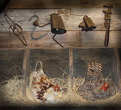 Laying Hens Art Print by Kim Henderson
