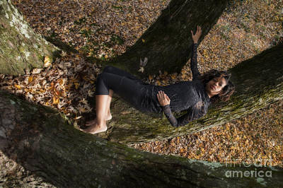 Photograph - Laying On A Limb by Dan Friend