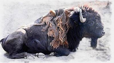 Photograph - Lazing Buffalo by Joe Duket