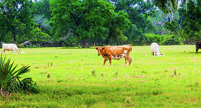 Photograph - Lazy Afternoon In The Life Of A Cow by Judy Wright Lott