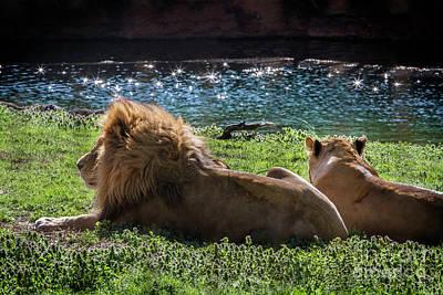 Photograph - Lazy Afternoon by Karen Jorstad